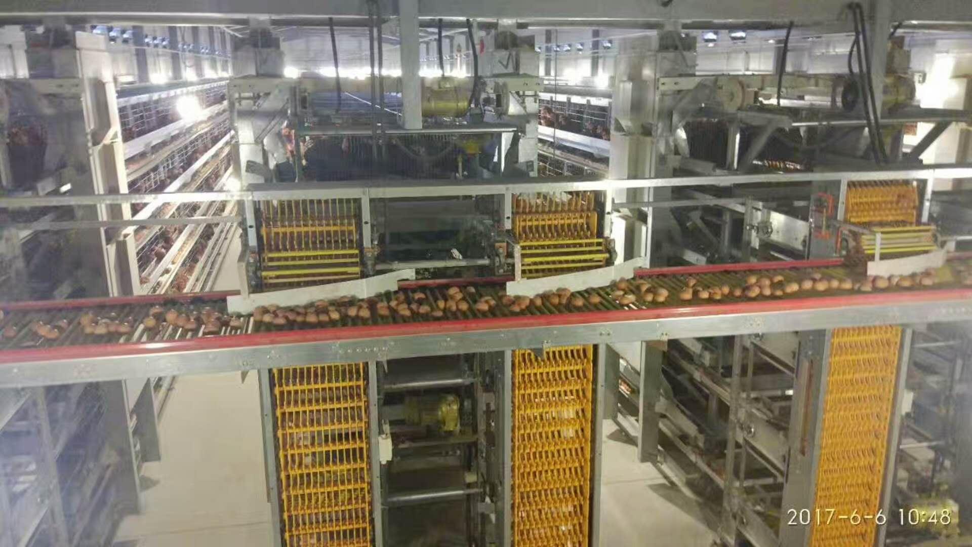 自动化集蛋系统