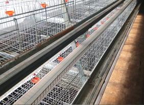 蛋鸡养殖饮水系统